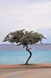 Gekrümmter Baum und tropisches Wasser Lizenzfreies Stockbild