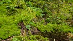 Gekrümmter Fluss durch Moosbett lizenzfreies stockfoto