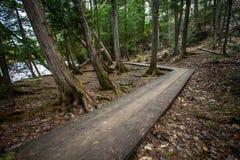 Gekrümmter Promenaden-Weg im Wald stockfoto