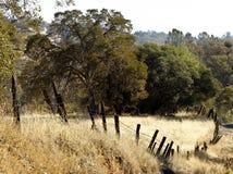 Gekrümmter Zaun Along ein goldenes Feld Stockfotos