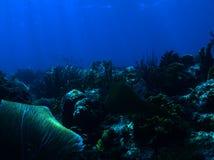 Gekrabbeld filefish Stock Afbeeldingen