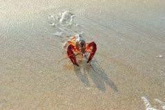Gekrabde zeekreeft levend op een strand stock fotografie