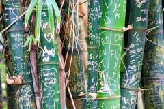 Gekraste uit brieven en initialen op groene bamboeboomstammen royalty-vrije stock fotografie