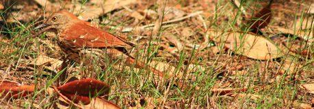 Gekregen me een Insect Stock Foto's
