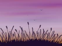 Gekritzelgras bei Sonnenuntergang Stockfotografie