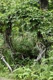 Gekronkelde greens poort Royalty-vrije Stock Foto