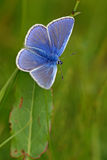 Geläufiges Blau Stockfotografie