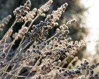 gelée d'herbe Image libre de droits
