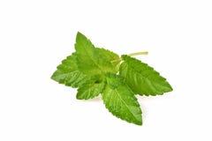 Gelée d'herbe (Mesona chinensis) images libres de droits