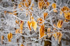 Gelée dans la forêt à feuilles caduques Images libres de droits