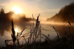 Gelée de dégel sur un Web Photo stock