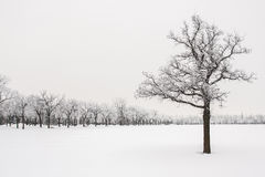 Gelée sur des arbres Image stock