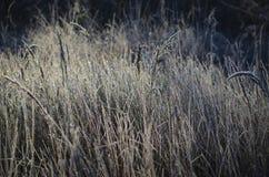 Gelée sur l'herbe Photographie stock libre de droits
