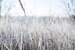 Gelée sur l'herbe Images libres de droits