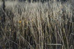 Gelée sur l'herbe Image libre de droits