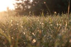 Gelée sur l'herbe pendant le matin de début de l'été Image stock