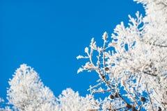 Gelée sur les arbres et le ciel bleu Photo libre de droits