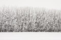 Gelée sur les arbres inclinés Photos libres de droits