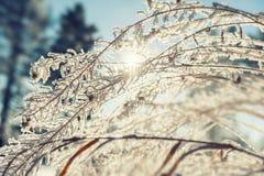 Gelée sur les usines dans la forêt d'hiver Photographie stock libre de droits