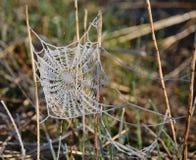 Gelée sur une toile d'araignée Photographie stock libre de droits