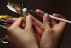 gel подсказка ногтя Стоковое Изображение