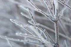 Gel blanc Photo libre de droits
