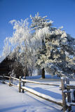 Gel blanc sur les arbres Images libres de droits