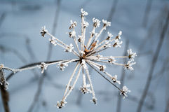 Gel d'hiver Images libres de droits