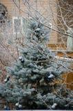 Gel d'hiver Photos libres de droits