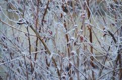 Gel d'hiver photo libre de droits