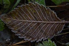 Gel de dessin sur des verts gelés Image stock