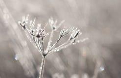 Gel de l'hiver photographie stock
