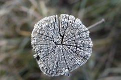 Gel de l'hiver sur le bois photographie stock