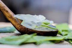 Gel di vera dell'aloe in un mestolo di legno Immagini Stock Libere da Diritti