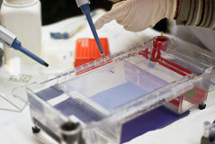Gel electrophoresis. Loading a dna sample into a gel for electrophoresis Royalty Free Stock Photo