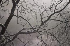 Gel et brouillard Photographie stock