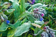 gel sur des fleurs Images libres de droits