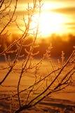 Gel sur l'arbre au lever de soleil Images libres de droits