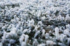 gel sur l'herbe images libres de droits
