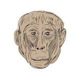 Gelada małpy głowy rysunek Zdjęcie Stock