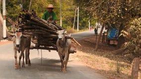 geladenes Fahrzeug mit glattem Zoom 1 oxes Myanmars stock video