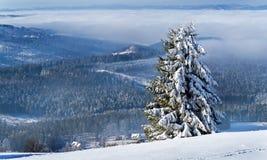 Gelado, manhã do inverno nas montanhas fotografia de stock