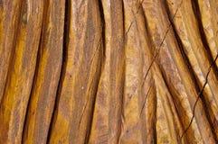 Gelakte houten textuursamenvatting Stock Foto's