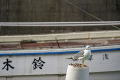Gelande vogel en boot Japan stock fotografie