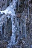 Gelata profonda del ghiacciolo Immagini Stock