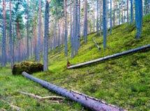 Gelaten vallen boom in wild bos levendig landschap Stock Foto's
