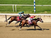 Gelatians winning at Belmont. In a thrilling finish at beautiful Belmont Park. Fleethoto royalty free stock images