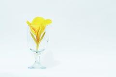 gelb Lizenzfreie Stockfotografie