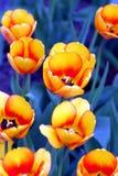 Gelb auf dem Blau Lizenzfreie Stockbilder