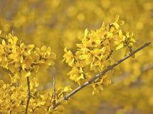Gelb auf Frühjahr-Gelb stockbilder